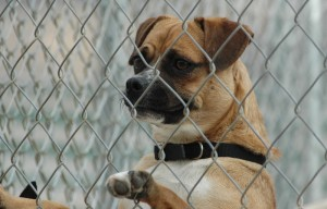 A Dog At Stephen Memorial Animal Shelter