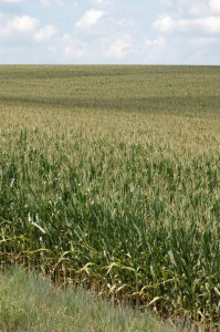Indications of stress to crops continues as the moderate drought continues