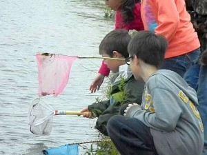 OES 1st grade students explore the Lacey Complex Pond. (submitted photo)