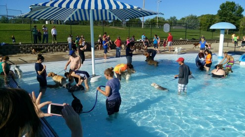 104 dogs and their human companions enjoyed a dip in the Edmundson Pool on Sunday afternoon.