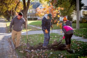 Volunteers work to plant trees in Oskaloosa on Saturday. Trees Forever and other volunteers planted 150 new trees,